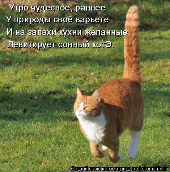Котоматрица: Утро чудесное, раннее У природы своё варьете И на запахи кухни желанные Левитирует сонный котЭ.