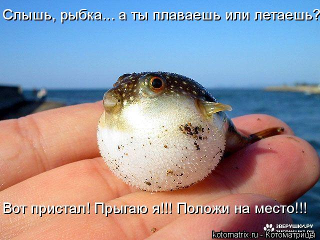 Котоматрица: Слышь, рыбка... а ты плаваешь или летаешь? Вот пристал! Прыгаю я!!! Положи на место!!!
