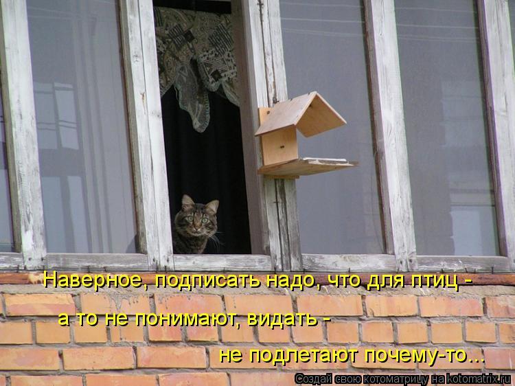 Котоматрица: Наверное, подписать надо, что для птиц -  а то не понимают, видать -  не подлетают почему-то...