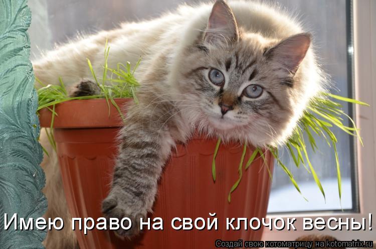 Котоматрица - Имею право на свой клочок весны!