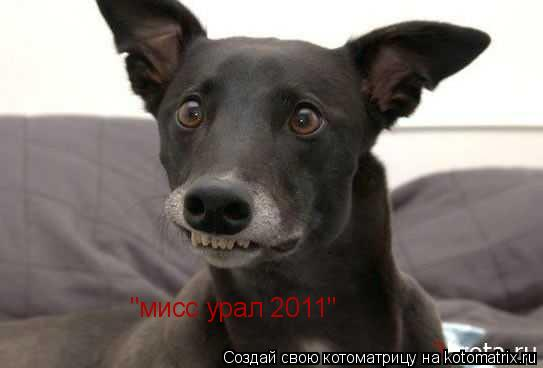 "Котоматрица: ""мисс урал 2011"""