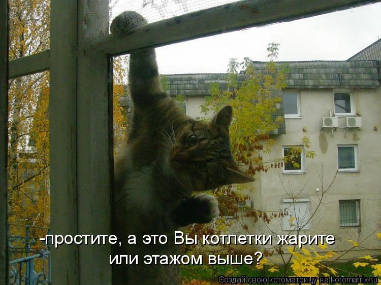Котоматрица - -простите, а это Вы котлетки жарите или этажом выше?