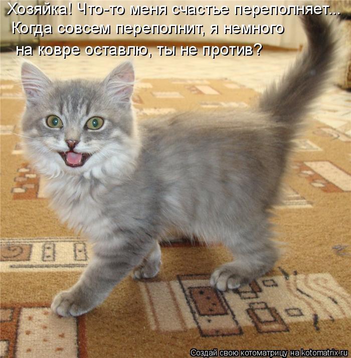 Котоматрица: Хозяйка! Что-то меня счастье переполняет... Когда совсем переполнит, я немного на ковре оставлю, ты не против?