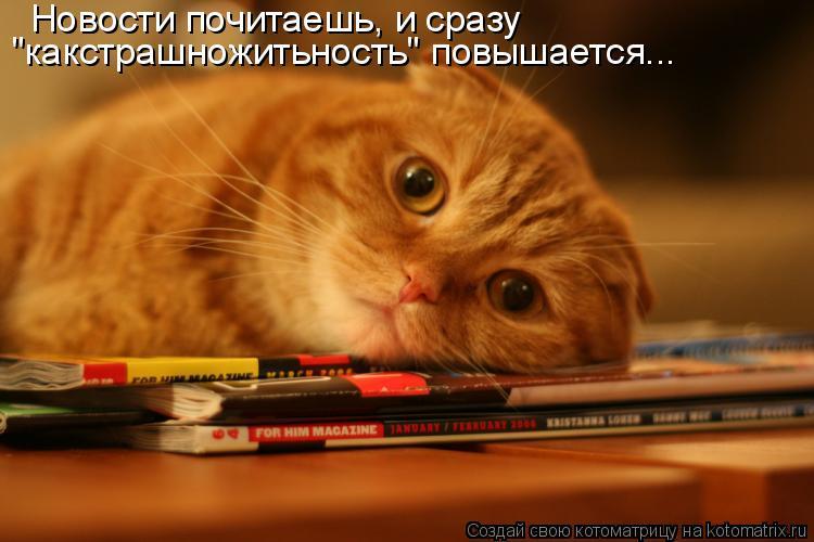 """Котоматрица: Новости почитаешь, и сразу  """"какстрашножитьность"""" повышается..."""