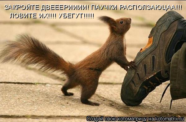 Котоматрица: ЗАКРОЙТЕ ДВЕЕЕРИИИИ! ПАУЧКИ РАСПОЛЗАЮЦАА!!! ЛОВИТЕ ИХ!!!! УБЕГУТ!!!!!