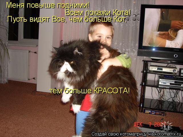 Котоматрица: Меня повыше подними! Всем покажи Кота! Пусть видят Все, чем больше Кот,  тем больше КРАСОТА!