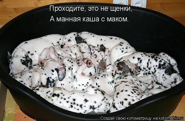 Котоматрица: Проходите, это не щенки, А манная каша с маком.