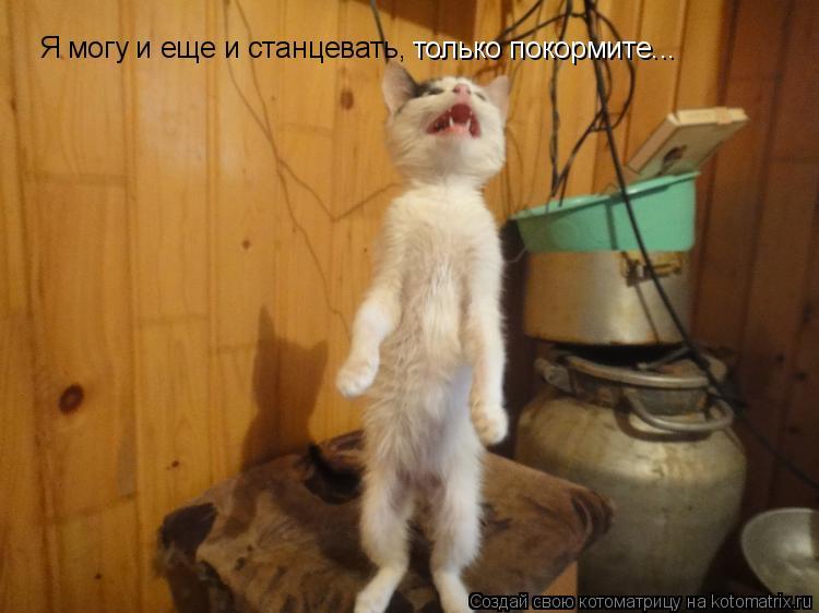 Котоматрица: Я могу и еще и станцевать, Я могу и еще и станцевать, только покормите...