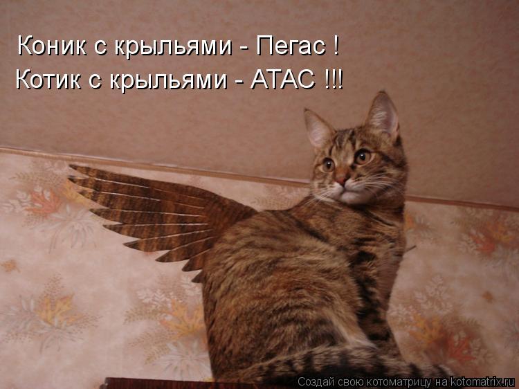 Котоматрица: Коник с крыльями - Пегас ! Котик с крыльями - АТАС !!!