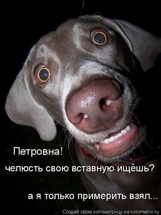 Котоматрица: Петровна!  челюсть свою вставную ищешь? а я только примерить взял...