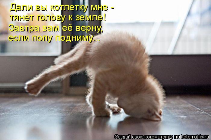 Котоматрица: Дали вы котлетку мне - Завтра вам её верну, тянет голову к земле! если попу подниму...
