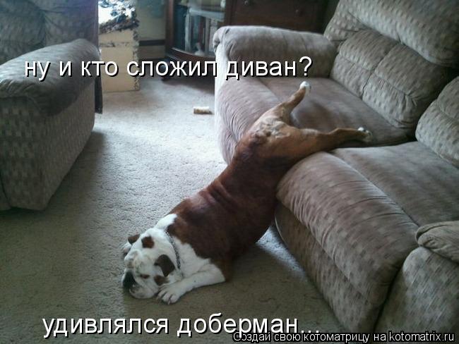 Котоматрица: ну и кто сложил диван? удивлялся доберман...
