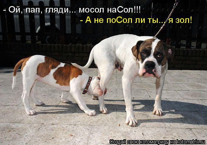 http://kotomatrix.ru/images/lolz/2011/04/13/883492.jpg