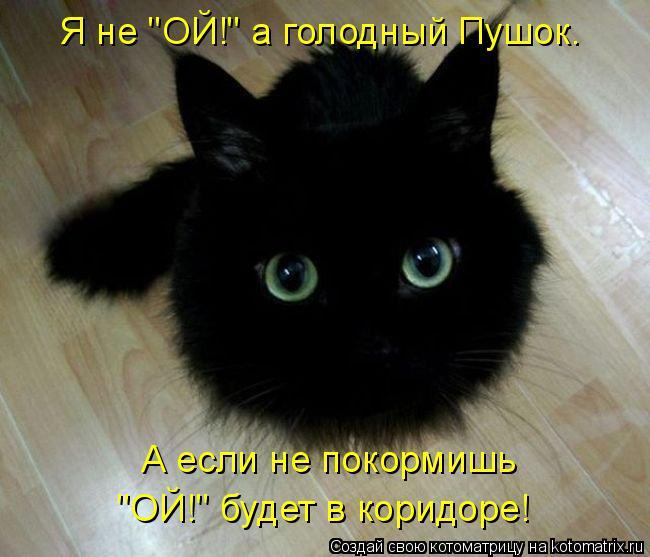 """Котоматрица: Я не """"ОЙ!"""" a голодный Пушок. А если не покормишь  """"ОЙ!"""" будет в коридоре!"""