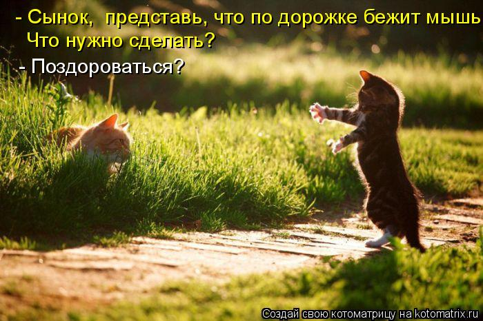 Котоматрица: - Сынок,  представь, что по дорожке бежит мышь. Что нужно сделать? - Поздороваться?