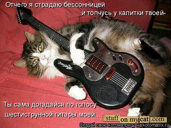 Котоматрица: Отчего я страдаю бессонницей и топчусь у калитки твоей- Ты сама догадайся по голосу шестиструнной гитары моей...
