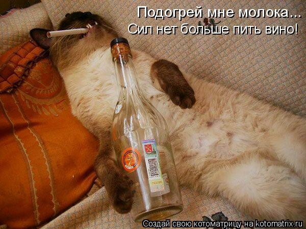Котоматрица: Подогрей мне молока... Сил нет больше пить вино!