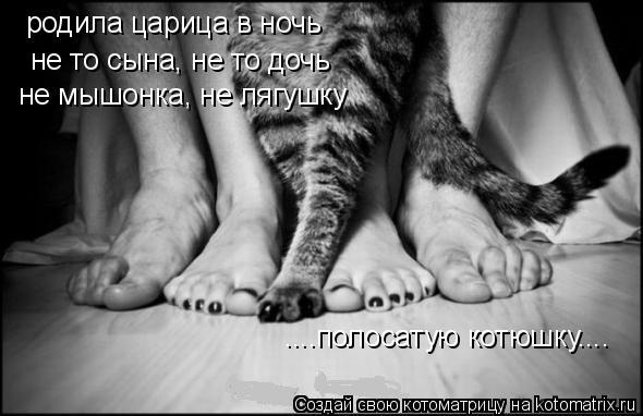 Котоматрица: не то сына, не то дочь родила царица в ночь не мышонка, не лягушку ....полосатую котюшку....