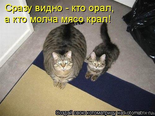 Котоматрица: Сразу видно - кто орал,  а кто молча мясо крал!