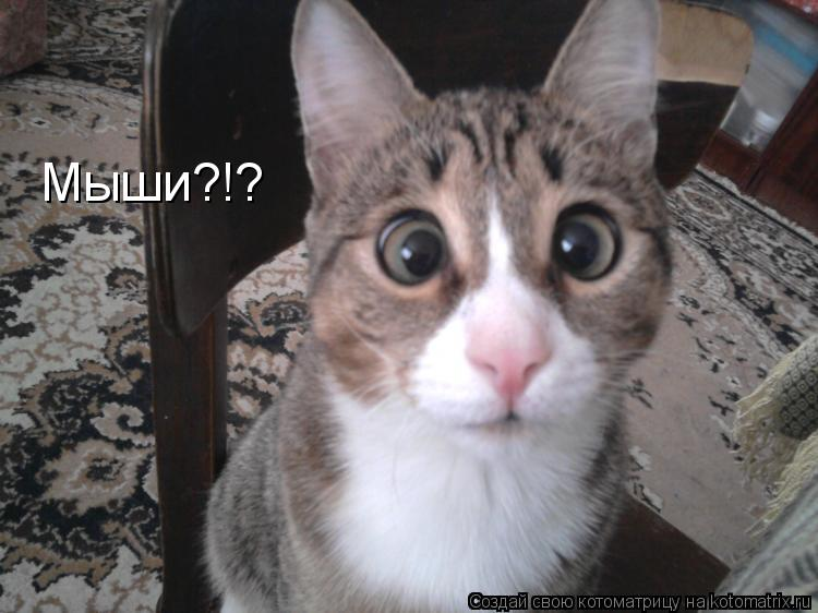 Котоматрица: Мыши?!?
