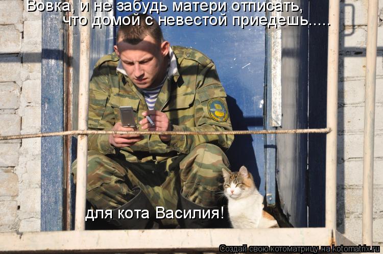 Котоматрица: что домой с невестой приедешь..... для кота Василия! Вовка, и не забудь матери отписать,