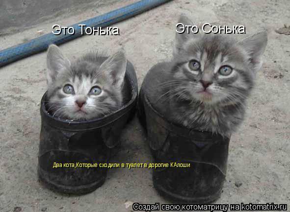 Котоматрица: Это Тонька Это Сонька Два кота,Которые сходили в туалет в дорогие КАлоши