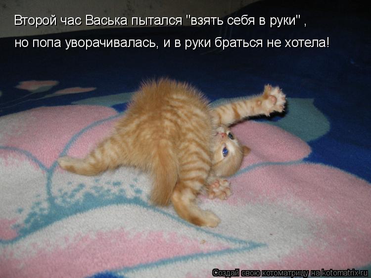 """Котоматрица: Второй час Васька пытался """"взять себя в руки"""" , но попа уворачивалась, и в руки браться не хотела!"""