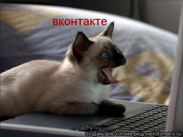 Котоматрица: вконтакте