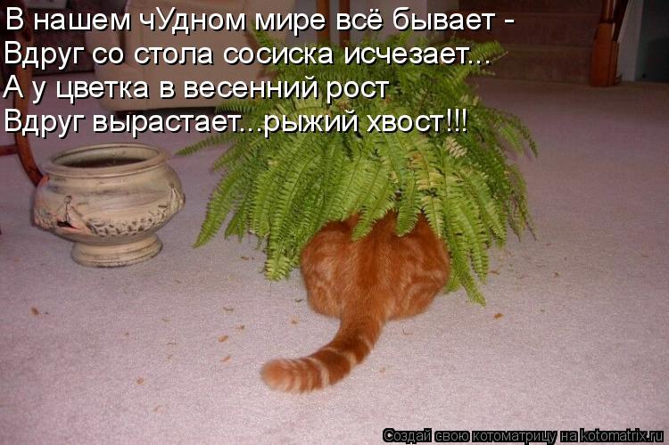 Котоматрица: В нашем чУдном мире всё бывает - Вдруг со стола сосиска исчезает... А у цветка в весенний рост Вдруг вырастает...рыжий хвост!!!