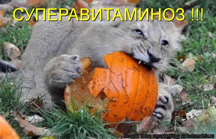 Котоматрица - СУПЕРАВИТАМИНОЗ !!!