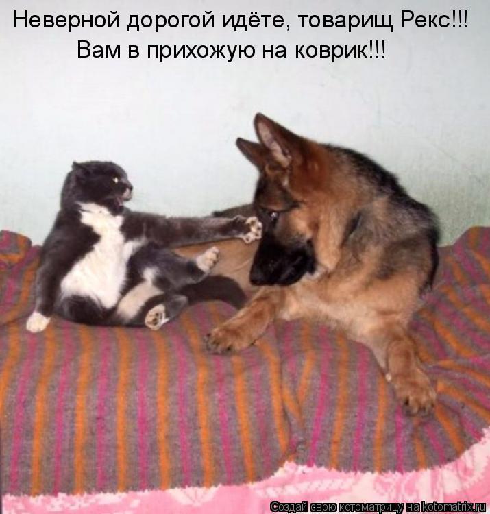 Котоматрица: Неверной дорогой идёте, товарищ Рекс!!! Вам в прихожую на коврик!!!