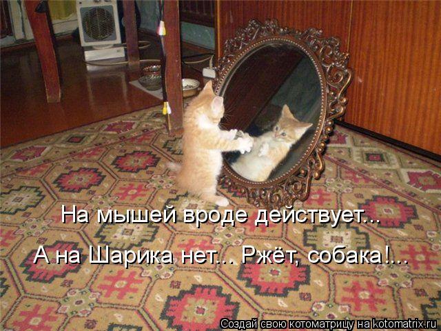 Котоматрица: На мышей вроде действует... А на Шарика нет... Ржёт, собака!...