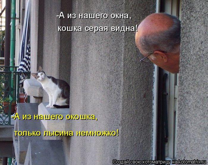 Котоматрица: -А из нашего окошка, -А из нашего окна, кошка серая видна! только лысина немножко!
