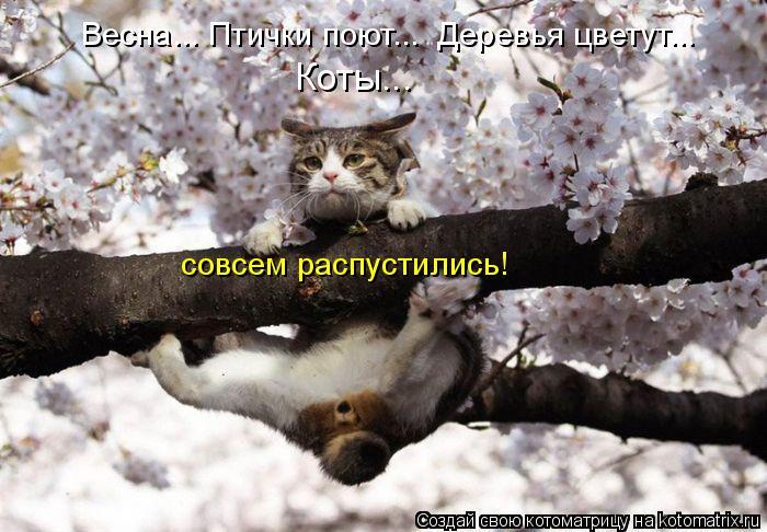 Котоматрица - Весна... Птички поют...  Деревья цветут...  Коты... совсем распустилис