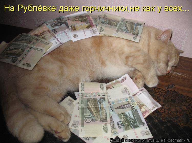 Котоматрица - На Рублёвке даже горчичники,не как у всех...