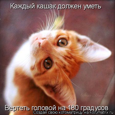 Котоматрица: Каждый кашак должен уметь Вертеть головой на 180 градусов