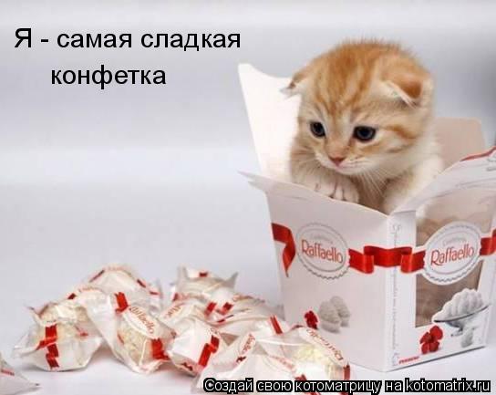 Котоматрица: Я - самая сладкая конфетка