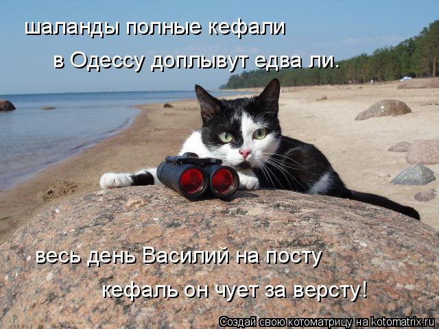 Котоматрица: шаланды полные кефали в Одессу доплывут едва ли. весь день Василий на посту кефаль он чует за версту!