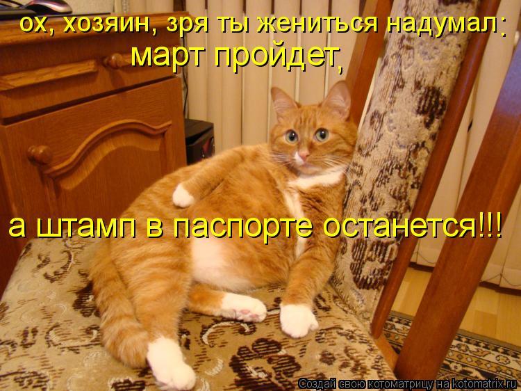 Котоматрица: ох, хозяин, зря ты жениться надумал март пройдет а штамп в паспорте останется!!! : ,
