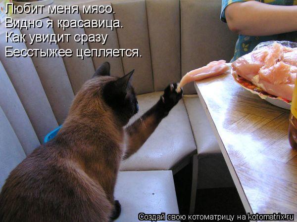 Котоматрица: Любит меня мясо. Видно я красавица. Как увидит сразу Бесстыжее цепляется.