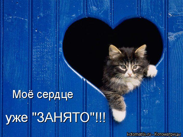 """Котоматрица: Моё сердце уже """"ЗАНЯТО""""!!!"""