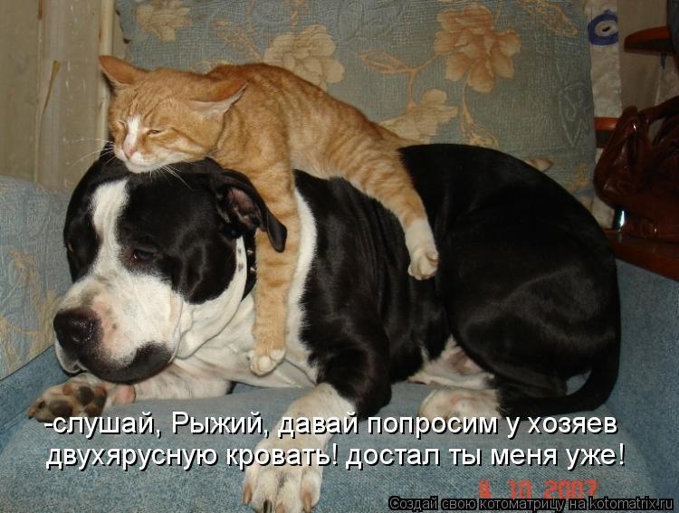 Котоматрица - -слушай, Рыжий, давай попросим у хозяев двухярусную кровать! достал ты