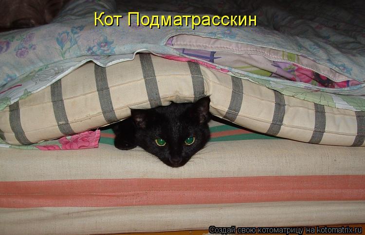 Котоматрица: Кот Подматрасскин
