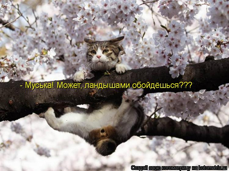 http://kotomatrix.ru/images/lolz/2011/04/17/886819.jpg