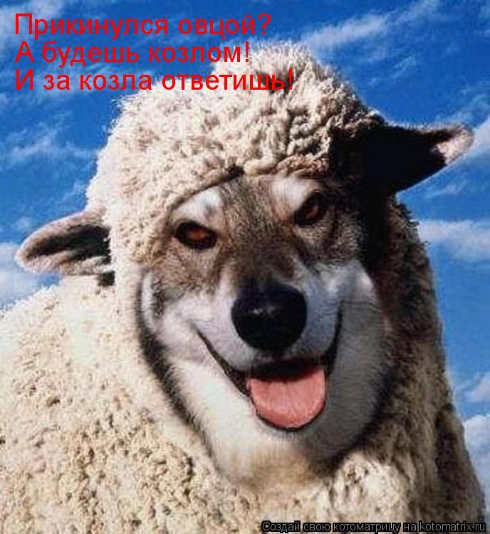 Котоматрица: Прикинулся овцой? А будешь козлом! И за козла ответишь!