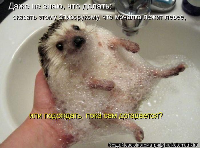 http://kotomatrix.ru/images/lolz/2011/04/18/887670.jpg