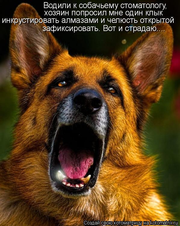 Котоматрица: Водили к собачьему стоматологу,  хозяин попросил мне один клык инкрустировать алмазами и челюсть открытой зафиксировать. Вот и страдаю....