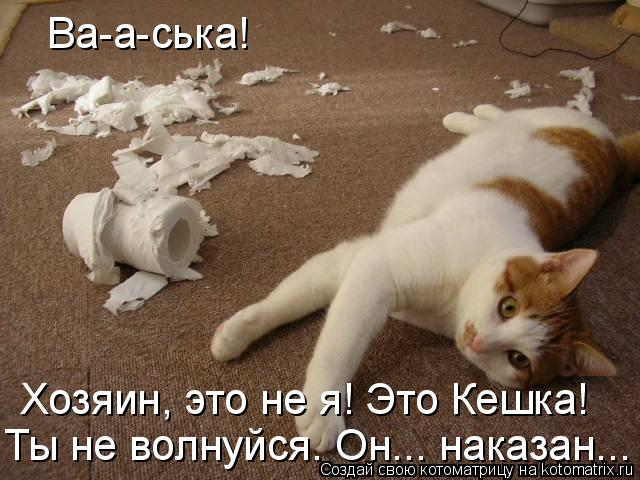 Котоматрица - Ва-а-ська!  Хозяин, это не я! Это Кешка! Ты не волнуйся. Он... наказан