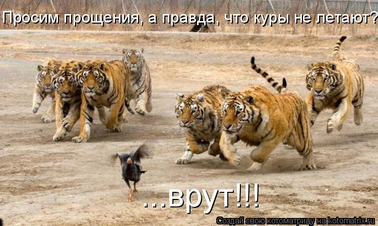 Котоматрица: Просим прощения, а правда, что куры не летают? ...врут!!!