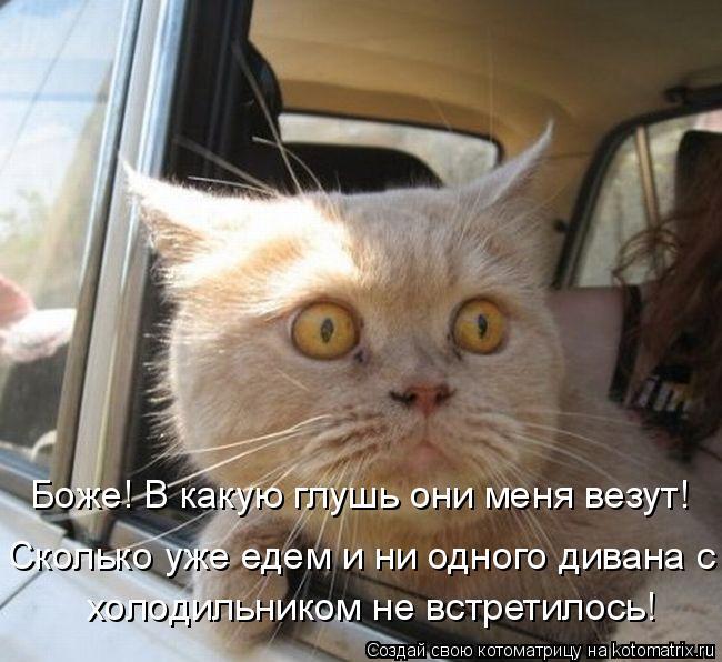 Котоматрица - Боже! В какую глушь они меня везут! Сколько уже едем и ни одного диван